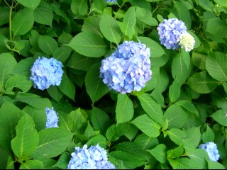 2008_6_14_27