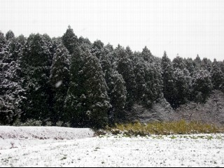 2011_1_03_89